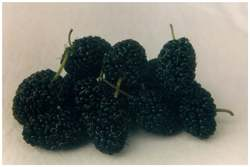 Mulberry - Incredible Edibles® ... Bringing Your Garden ...